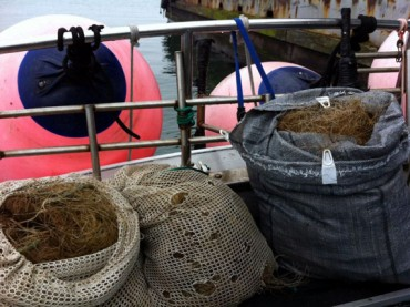 Picture of fishing net removed from the Scylla reef