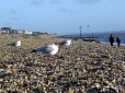 Picture of seagulls on a UK beach