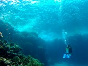 Picture of Camel Dive Club, Red Sea