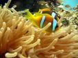 Picture of Sinai Divers Sharm El Sheikh