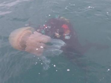 Christine photographs barrel jellyfish