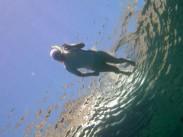 A snorkeller, yesterday